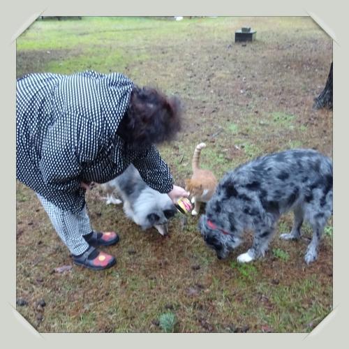 Sylvia-med-hundarna